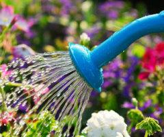 garden_watering