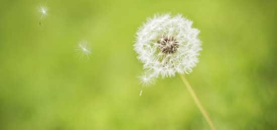 allergy prevention and cure